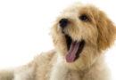 5 sinais de que seu cachorro é feliz