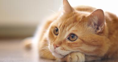 Dicas para cuidar do seu gato