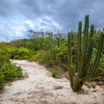 Macaé realiza mutirão ecológico na praia do Parque do Barreto